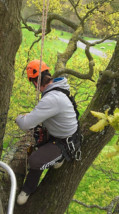 rope access in tree